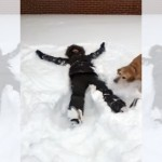 新雪の上に寝転がって両腕をバタバタさせたら、愛犬が真似するんだけど…