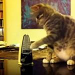 イライラするにゃ~!?|カチカチと動くメトロノームに荒ぶる猫たち(笑)