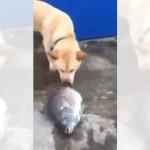 目の前に横たわる魚を見て、予想外の行動をする純真で心優しい犬
