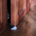 ドアを開けようとする子猫 → 次から次へと助っ人の参入 → 気になる結果は…