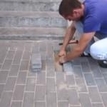 歩道の補修工事中、誤って生き埋めにされてしまったワンちゃんの救出劇