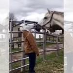 馬のマスクをかぶった女性に興味津々な馬 → マスクを外してみると…