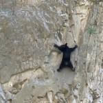 危なっかしくて見ていられない → 断崖絶壁を登る熊の親子