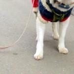愛犬と散歩中にリードが落下 → 数歩進んで気が付き、振り返ってみると…