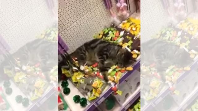 ペットショップに猫が乱入 → 向かった先が…、あ、それアカンやつ(笑)