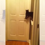 部屋のドアを上手に開けてワンちゃんを迎え入れるお利口な猫ちゃん♪