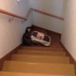 ベッドを2階へ運ぶ猫にまさかの悲劇 → 虚しく響き渡る哀しい鳴き声