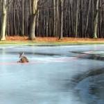 氷の上で身動きが取れなくなった鹿を救助したら、ほっこりする出来事が…