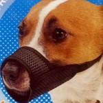 愛犬の噛み付き防止マスクの装着イメージ → パグだけ様子が違っていた(笑)