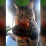 「絶対に離さないにゃ~!」 → 盗んだピザに喰らい付いたまま必死に抵抗する猫(笑)