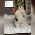新しい飼い主に出会えて大喜びするペットショップのワンちゃん。はしゃぎ過ぎ(笑)!