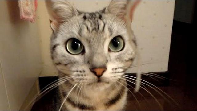 家族旅行でひとり家に置いてきぼりにされた猫 → 家族が帰ってくると(笑)