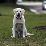 「もし話すことができたら…」愛犬のあなたへの最後の言葉