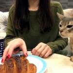 クロワッサンが欲しくて堪らない猫 → お姉さん相手に悪戦苦闘(笑)