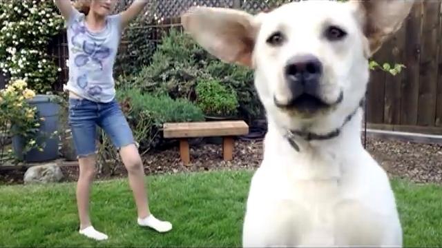 まるでコント(笑) → 側転の動画撮影をする女の子 vs 動画撮影を邪魔するワンコ