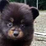 なんてカワイイ子熊なの!! → いいえ、子犬ですU^ェ^U