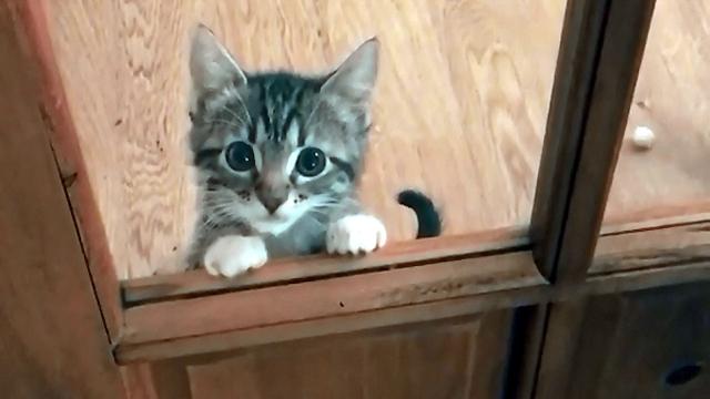 遊んで欲しい子猫…ドアの向こうから一生懸命ママさんにアピール♡