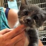 保護施設に馴染めずにいた子猫 → 優しい女性に引き取られると、最高の出会いが待っていた!
