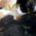 眠っている子犬の頭を優しく撫でながら、究極の愛情を注ぐ猫