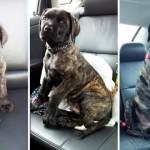 子犬から成犬へ → ワンコのビフォー・アフター写真集 35枚