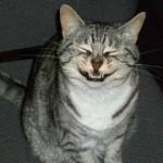 くしゃみが出る直前を捉えた、表情がブチャ可愛い猫たちの写真アレコレ 20枚