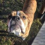 愛犬を手放すことになった家族 → 幼い少女から託された新しい飼い主への手紙