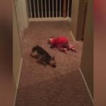 赤ちゃんの真似をしてハイハイをするワンコ(笑)