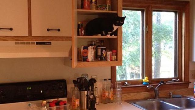 「うちは猫を飼ってたっけ?」…家の中に見知らぬ猫が…驚きの瞬間アレコレ 10枚