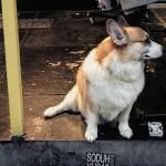 飼い主の買い物中、店の外でひたすら待ち続ける哀しげな犬たちの写真集 15枚