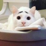 嬉しくても哀しくても困り顔 → 八の字眉毛で愛嬌を振りまく猫 15枚
