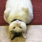 「うちの猫は変な趣味があるのでは…と心配になる」→ 飼い主が危惧する猫の行動(笑)