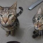 散歩から帰って来た猫 → ふと見ると首輪には飼い主に宛てられた感動のメッセージが…