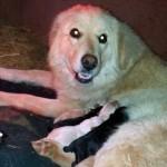 我が子を亡くして哀しみに暮れる母犬に、母親を亡くした子犬たちを会わせてみると…