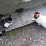 転がっている1個のお菓子を挟んで睨み合う2匹の猫 → 果たして軍配はどちらに…