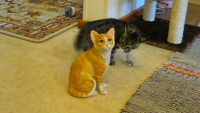 置物の猫にケンカを売る子猫 → 必死に挑発するも相手にされず…(笑)