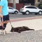 散歩の途中で歩くのが嫌になり、寝転がって動こうとしない怠惰なワンコ(笑)