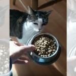 お腹を空かせた猫に朝ごはんをあげたら、興奮して何か喋りだした!(笑)