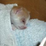 ボロボロの捨て猫を家族に迎え入れて8ヶ月 → こんなに立派に成長!