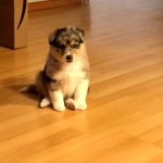 新しく家族になった子犬を撮影 → その写真の背後に写っていたものが…(笑)