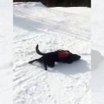 雪の積もった斜面を楽しそうに滑り降りるワンコ♪