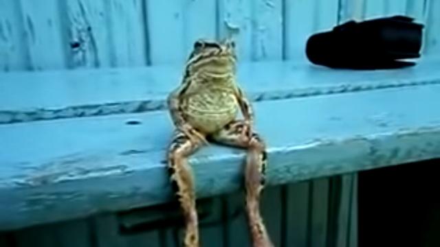 振る舞いはどう見ても人間 → 鳥獣戯画から飛び出して来たかのようなカエル