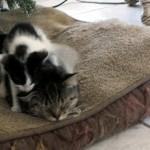 遊びに出掛けていた猫が一匹の子猫を連れて帰ってきたんだけど…