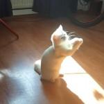 部屋に差し込む日差しの中で奇妙な動きをする猫