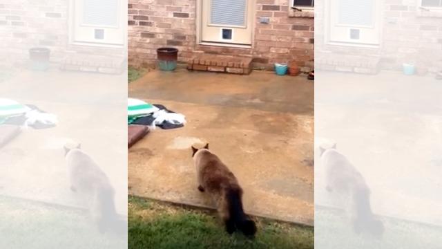 猫専用ドアが完成! さっそく猫に試してもらうと…(笑)