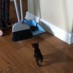 なんと無慈悲な(笑)!? → ホウキで掃いて片付けられる子猫たち