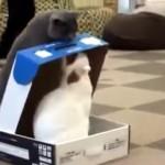 ダンボールのフタを閉じて、中に居る猫を封じ込めるいじめっこ猫