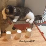 スリーシェルゲームに挑戦する猫 → 半端ない正解率に驚愕!?