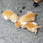 車に貼られた見知らぬ人からのメッセージが、3匹の子猫の命を救う!