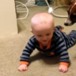 赤ちゃんにハイハイの仕方を教えるワンコ