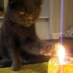 ロウソクの炎で前足を炙っては舐め…奇妙な行動を繰り返す猫